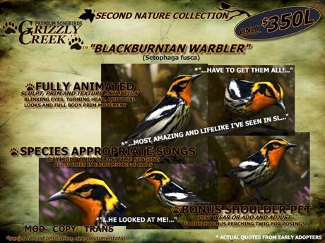 Grizzly Creek Songbird Blackburnian Warbler -Rez or Wear-