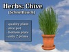 Herb Chive