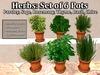 6 Herb Pots