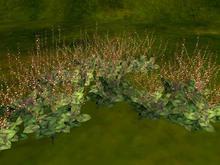 Jumpseed (mizuhiki) copy