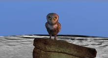 Hooti The owl He hoots and blinks so cute:P