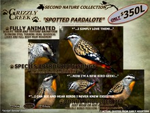 Grizzly Creek Spotted Pardalote Songbird (Basic)