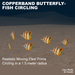 7 Flex Copperband Butterflyfish circling