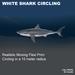 Add   white shark circling