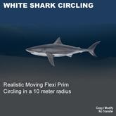 White Shark Cirkling