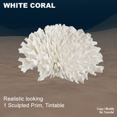 1 prim White Coral