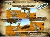 Grizzly Creek Songbird Western Meadowlark -Rez or Wear-