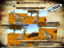 Grizzly Creek Songbird Western Meadowlark (Basic)