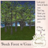 Beech Forest with Grass Boxed