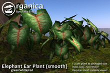 [ Organica ] Elephant Ear Plant (smooth)(green/white/red)