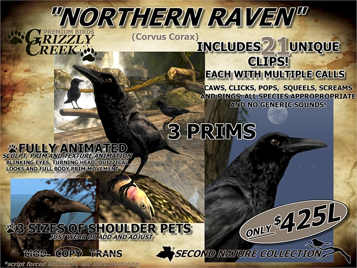 GC SCULPTED NORTHERN RAVEN -Rez or Wear-
