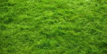 Realistic Grass Texture