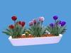 Spring Flowerbox Plant 1