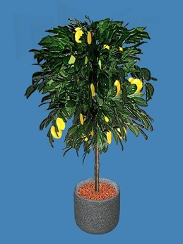 Lemon Tree Potted Plant