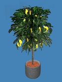 Lemon Tree Potted Plant