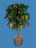 Orange Tree Potted Plant