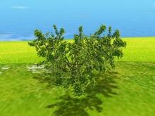 One Prim TRUE Plant - Shrub, True 3D Trunk, True Foliage, Copy&Modify Spring Summer