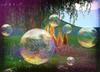 Dream Bubbles