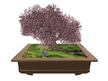 ::TWL:: Bonsai Sakura Tree - Sculpted
