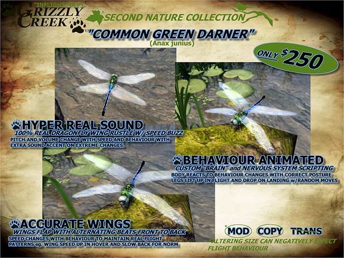 """Grizzly Creek Dragonfly Common Green Darner """"Living Addition"""""""