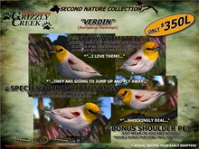 Grizzly Creek Songbird Verdin (Basic)