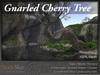 Skye gnarled cherry 1