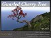 Skye gnarled cherry 2