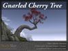 Skye gnarled cherry 3
