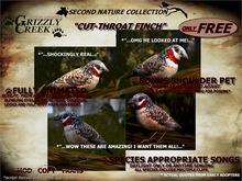 Grizzly Creek FREE Songbird  Cut-Throat Finch -Rez or Wear-