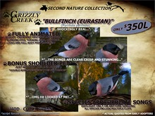 Grizzly Creek Bullfinch (Eurasian) Basic