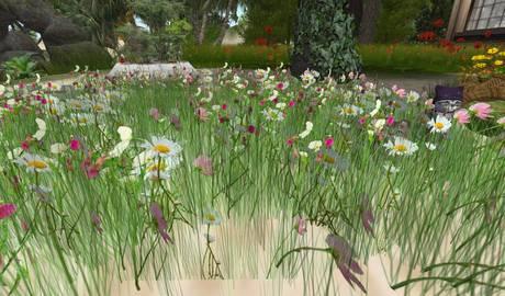 CJ Field round - lovely wild Flowers - c + m -