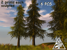 PINE TREES MODIFY TRANSFER