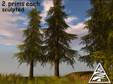 PINE TREES COPY MODIFY