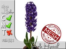 Terrashop- Purple Hyacinth MC