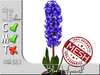 Terrashop- Blue Hyacinth MC