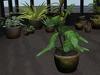 Dutchie mesh plants: Philodendron medium
