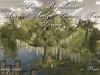 ~*SR*~ Ancient Aralia Swamp Tree Spring c/m