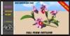 ALESTA << Mesh Cattleya (Orchid) Flower Full Perm