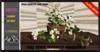 ALESTA << Mesh Japanese Hawthorn Flower Full Perm