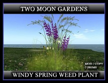 WINDY SPRING WEED PLANT*