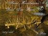 ~*SR*~ Dead Tree Roots V.01