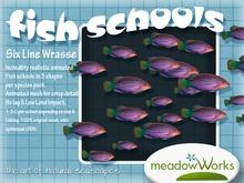 Fish School ~ Six Line Wrasse