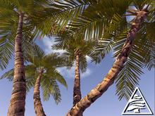 Palm trees COPY MODIFY