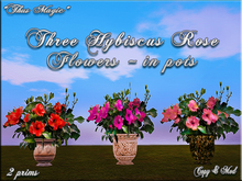 *Thus Magic* ~THREE Hybiscus flower/plants in VASE/POT (BOX)