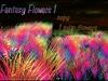 *{Nature's Beauty}*-Wispa's Flower Rainbow