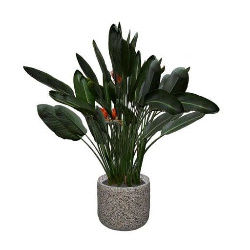 Bird Of Paradise Potted Plant
