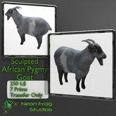 African Pygmy Goat Transfer