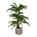 Goldfruit Palm Potted Plant