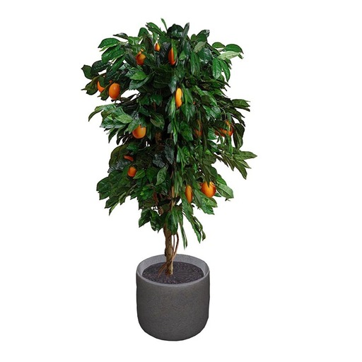 Orange Tree 2 Potted Plant