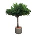 Olive Tree Potted Plant